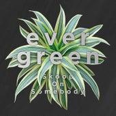 Evergreen de Skoop On Somebody
