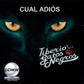 Cual Adiós by Tiberio Y Sus Gatos Negros