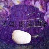49 Still Life Meditation von Massage Therapy Music