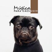 Música para Cães 2019 de Academia de Música para Animais