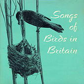 Songs of Birds in Britain by John Kirby