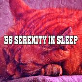 56 Serenity in Sleep by Best Relaxing SPA Music
