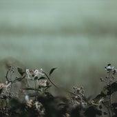 In Memory Of... (4guru) by Psalm Trees