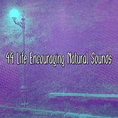44 Life Encouraging Natural Sounds by Yoga Music