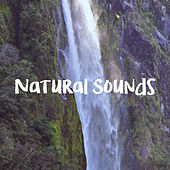 Natural Sounds de Various Artists
