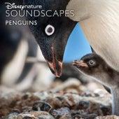 Disneynature Soundscapes: Penguins de Disneynature Soundscapes