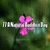 77 A Natural Buddhist Day by Music For Meditation