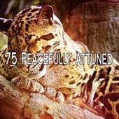 75 Peacefully Attuned de S.P.A