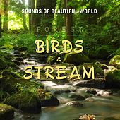 Forest: Birds & Stream (Nature Sounds for Relaxation Meditation Healing & Sleep) by Sounds of Beautiful World