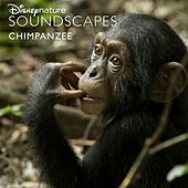 Disneynature Soundscapes: Chimpanzee de Disneynature Soundscapes