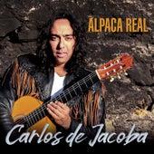 Alpaca Real de Carlos de Jacoba
