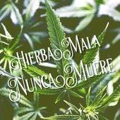 Hierba Mala Nunca Muere de Various Artists