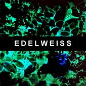 Edelweiss by Sleepy