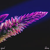 Bloom by Sqwd