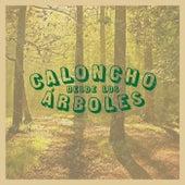 Desde Los Árboles (En Directo Desde El Desierto) by Caloncho