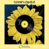 Sunflower by Odetta