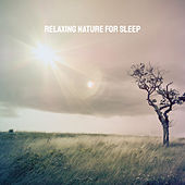 Relaxing Nature for Sleep by Various Artists