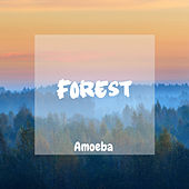 Forest by Amoeba