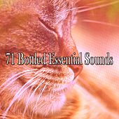 71 Bottled Essential Sounds by Ocean Sounds Collection (1)