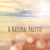A Natural Palette by Nightnoise
