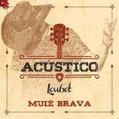 Muié Brava (Acústico) de Loubet