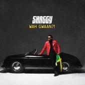 Shaggy – Songs & Albums