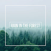 Rain In The Forest de Various Artists
