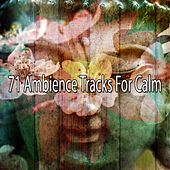 71 Ambience Tracks for Calm by Yoga Workout Music (1)