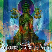 56 Sounds of a Natural World von Entspannungsmusik