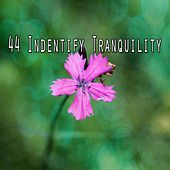 44 Indentify Tranquility de Nature Sounds Artists