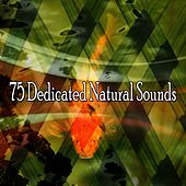 75 Dedicated Natural Sounds von Massage Therapy Music