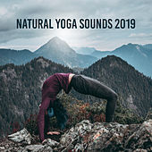 Natural Yoga Sounds 2019 – 15 New Age Songs for Meditation & Deep Relaxation, Nature Music, Zen Melodies, Mantra, Mindfullness Lullabies von Meditation Awareness New Age