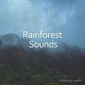 Rainforest Sounds for Massage and Studying de Relaxing Music (1)