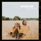 Still Into You di Meadowlark