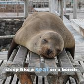Sleep Like a Seal on a Bench by Sleep Sound Library