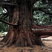 Redwood Tree by Milt Buckner
