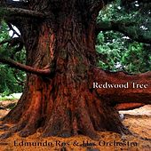 Redwood Tree by Edmundo Ros