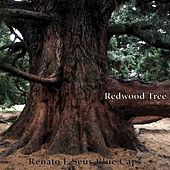 Redwood Tree von Renato E Seus Bluecaps