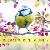 Birds in the Forest by Nature Sounds (1)