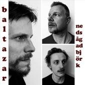 Nedsågad Björk de Baltazar