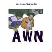 Awn by Ali Whales