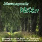 Stimmungsvolle Wälder, Waldgeräusche ohne Musik, zum Entspannen, Einschlafen oder als Hintergrundbeschallung de Waldgeräusche