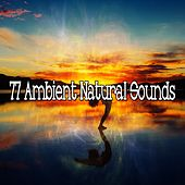 77 Ambient Natural Sounds de Nature Sounds Artists