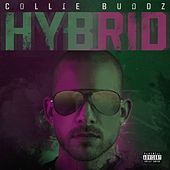 Hybrid de Collie Buddz