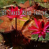 67 Taxed Mind Tracks von Lullabies for Deep Meditation