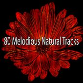 80 Melodious Natural Tracks de Zen Meditate