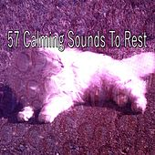 57 Calming Sounds to Rest by S.P.A