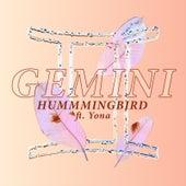Hummingbird di Gemini