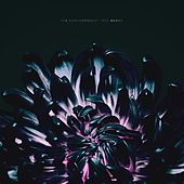 Our Bones by The Contortionist