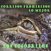 Corridos Prohibidos, Lo Mejor: Los Cocodrilos de Various Artists